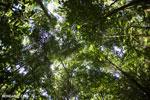 Ankarana dry forest [madagascar_ankarana_0199]