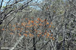 Orange flowering tree