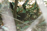 Bird [madagascar_ankarana_0297]