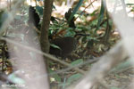 Bird [madagascar_ankarana_0298]