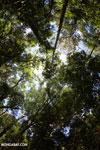 Madagascar dry forest