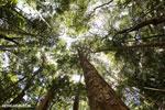 Madagascar dry forest [madagascar_ankarana_0320]