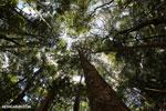Madagascar dry forest [madagascar_ankarana_0321]