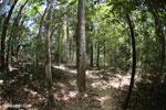 Madagascar dry forest [madagascar_ankarana_0323]