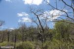 Madagascar dry forest [madagascar_ankarana_0324]