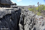 Limestone karst in Madagascar [madagascar_ankarana_0347]