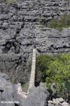 Tsingy bridge [madagascar_ankarana_0350]