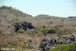 Limestone karst in Madagascar [madagascar_ankarana_0353]