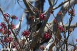 Sunbird [madagascar_ankarana_0357]