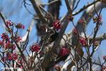 Sunbird [madagascar_ankarana_0358]