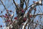 Sunbird [madagascar_ankarana_0359]