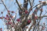 Sunbird [madagascar_ankarana_0360]
