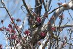Sunbird [madagascar_ankarana_0362]