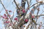 Sunbird [madagascar_ankarana_0363]
