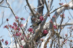 Sunbird [madagascar_ankarana_0364]