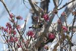 Sunbird [madagascar_ankarana_0365]