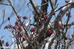 Sunbird [madagascar_ankarana_0366]