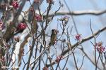Sunbird [madagascar_ankarana_0367]