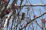 Sunbird [madagascar_ankarana_0368]