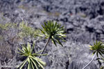 Tsingy vegetation [madagascar_ankarana_0375]