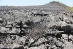 Tsingy vegetation [madagascar_ankarana_0377]