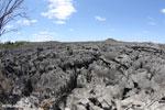 Limestone karst in Madagascar [madagascar_ankarana_0379]