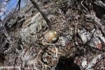 Tsingy vegetation [madagascar_ankarana_0381]