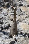 Tsingy vegetation [madagascar_ankarana_0390]