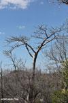 Tsingy vegetation [madagascar_ankarana_0402]