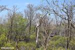 Tsingy vegetation [madagascar_ankarana_0407]