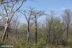 Tsingy vegetation [madagascar_ankarana_0408]