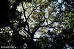 Madagascar dry forest [madagascar_ankarana_0420]