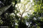 Madagascar dry forest [madagascar_ankarana_0421]