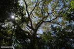 Madagascar dry forest [madagascar_ankarana_0423]