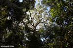 Madagascar dry forest [madagascar_ankarana_0424]