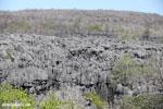 Tsingy in Madagascar [madagascar_ankarana_0427]