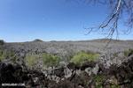 Tsingy in Madagascar [madagascar_ankarana_0429]