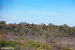 Ankarana dry forest [madagascar_ankarana_0460]