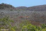 Tsingy in Madagascar [madagascar_ankarana_0461]