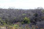 Ankarana dry forest [madagascar_ankarana_0462]