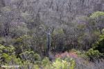 Ankarana dry forest [madagascar_ankarana_0463]
