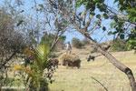 Malagasy farmer standing on a bale of hay [madagascar_diego_suarez_0029]