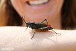 Rainbow locust [madagascar_herps_0017]