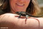 Chameleon [madagascar_herps_0026]