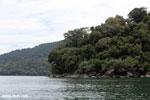 Rainforest on Nosy Mangabe [madagascar_maroantsetra_0019]
