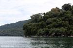 Rainforest on Nosy Mangabe [madagascar_maroantsetra_0020]