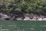 Rainforest on Nosy Mangabe [madagascar_maroantsetra_0021]