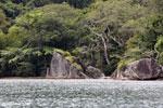 Rainforest on Nosy Mangabe [madagascar_maroantsetra_0023]