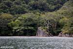 Rainforest on Nosy Mangabe [madagascar_maroantsetra_0025]
