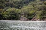 Rainforest on Nosy Mangabe [madagascar_maroantsetra_0026]